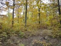 2015-10-25-prochazka-uklid-krmitka-brno-kohoutovice_0380