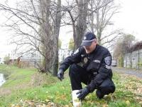 městská-policie-MP-Brno-Kohoutovice-akce-jehla-04