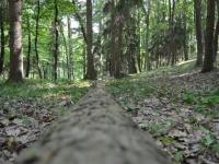2016-05-31-Mladé-hody-kácení-brno-kohoutovice-mojekohoutovice-0058
