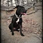 V oboře se zaběhl pes – našla ho odchytová služba Bystrc