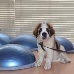 Místní poplatky ze psů je možné zaplatit do konce března!