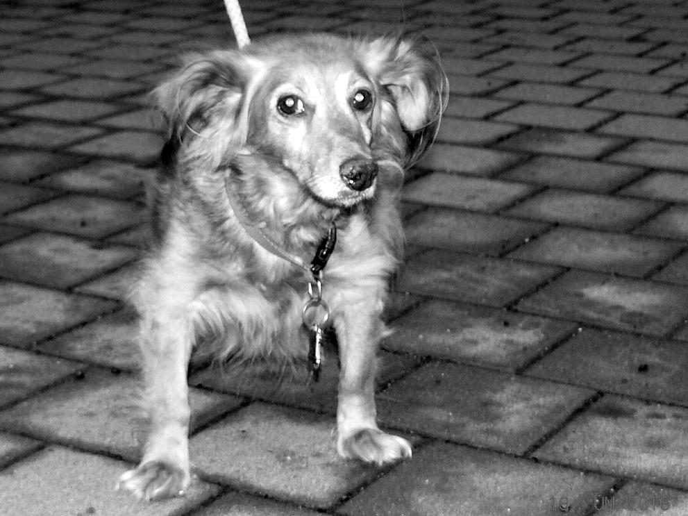 pes-vražda-sebevražda-Voříškova-15-brno-kohoutovice-mojekohoutovice-2