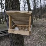 V Kohoutovicích se bude těžit dřevo – těžba bude obnovní i nahodilá