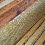 Medobraní ve Včelařství Pakostovi