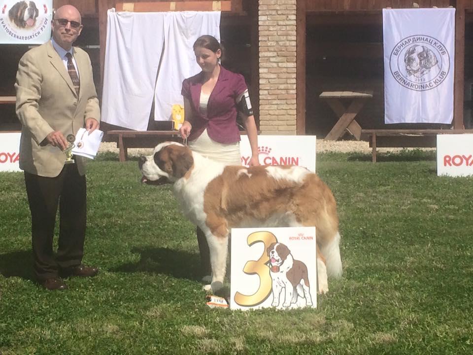 justMOVE-pes-svatobernadský-pes-výstava-brno-kohoutovice-mojekohoutovice-3