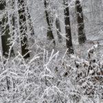Kohoutovice – zasněžený štědrý den